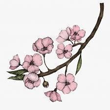 illustration-of-cherry-blossom-flower_53876-4287.jpg